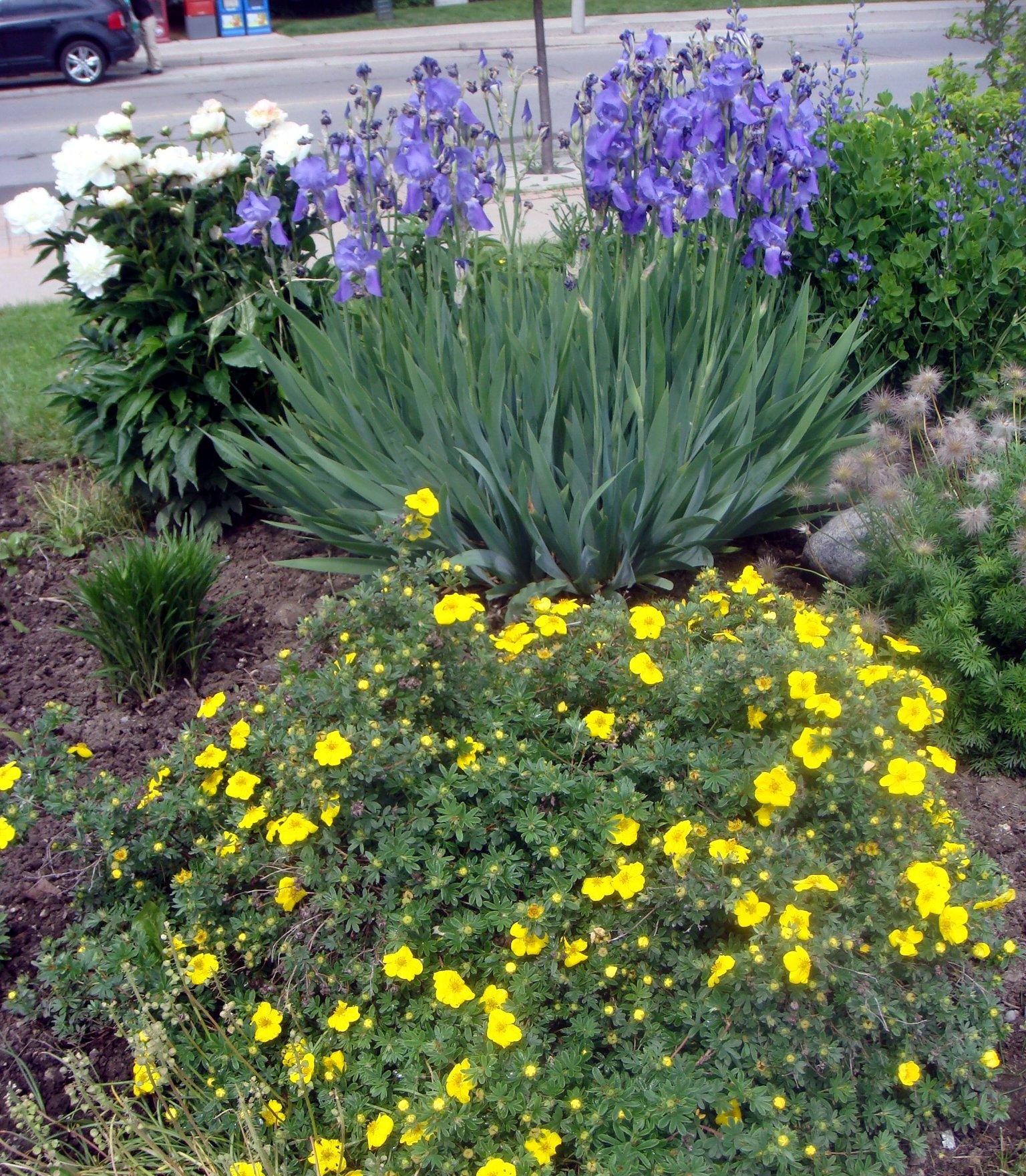 Bicentennial Gardens 2018