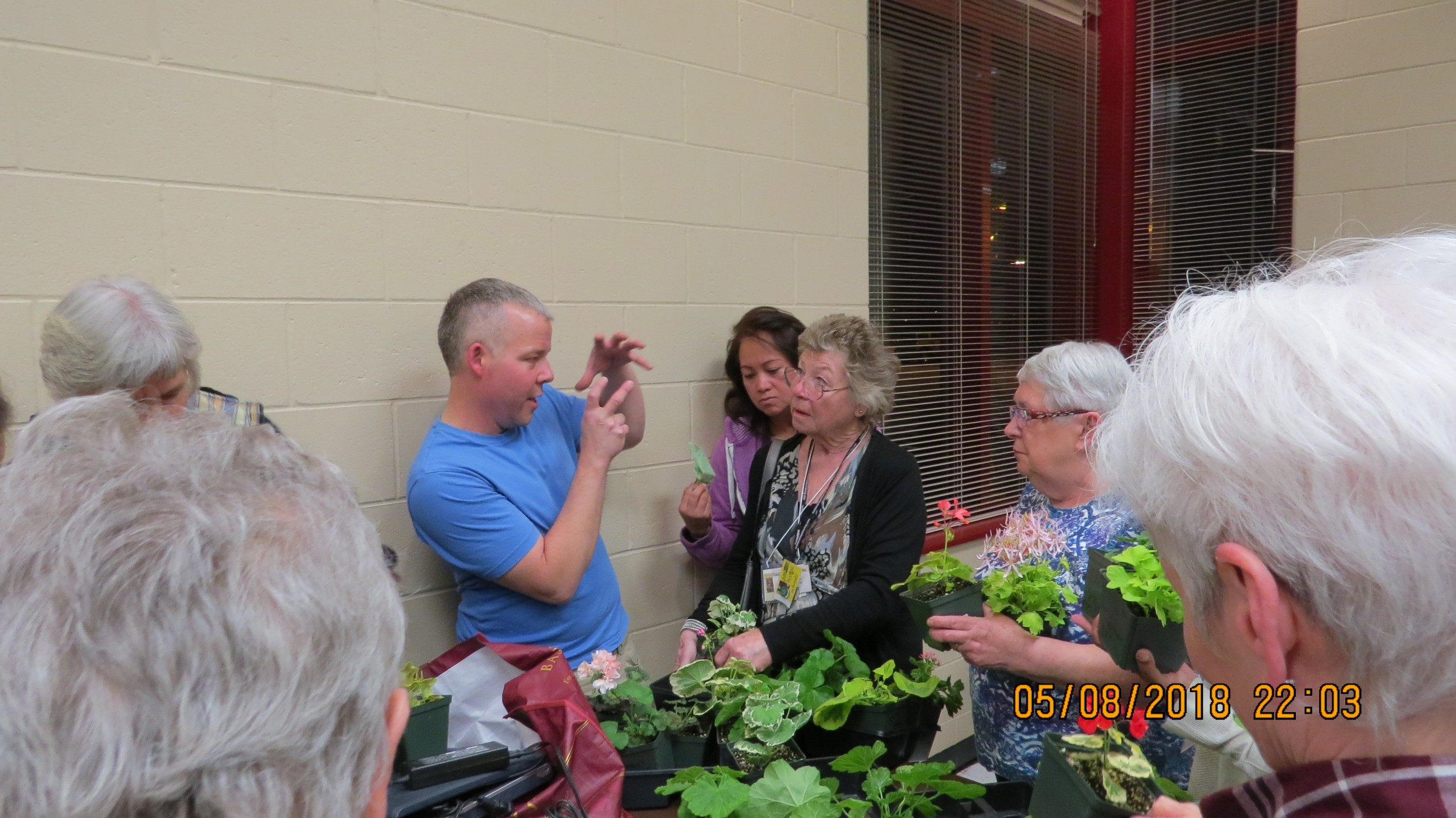 Bill Grainger and his Pelargoniums